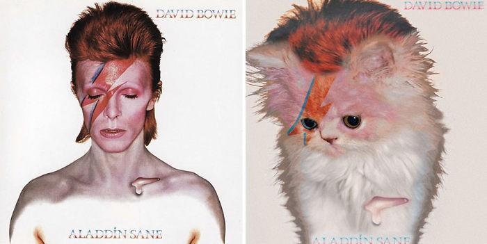 Artista substitui músicos por gatos (31)