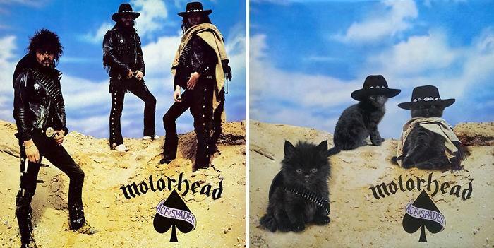 Artista substitui músicos por gatos (30)