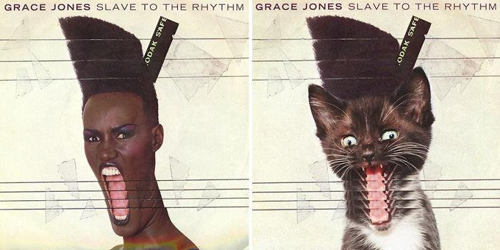 Artista substitui músicos por gatos (28)