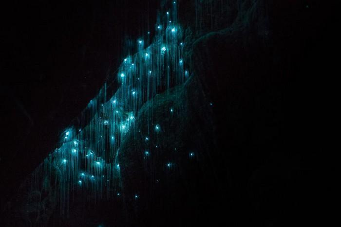 Cavernas mágicas da Nova Zelândia (3)