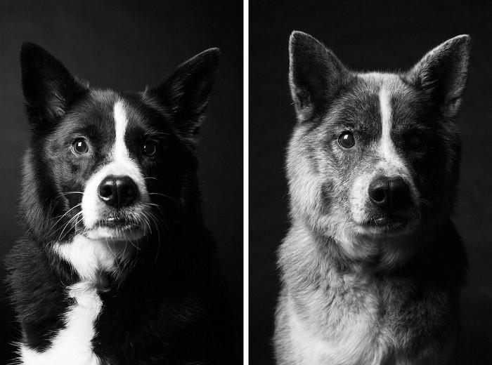 Antes e depois de cachorros velhinhos (2)