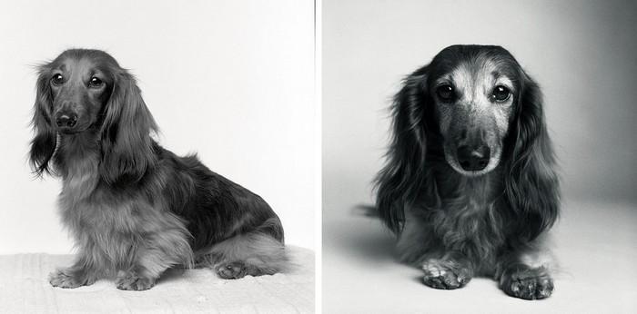 Antes e depois de cachorros velhinhos (5)