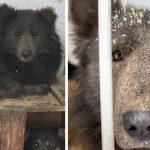 Cachorro cara de urso (6)