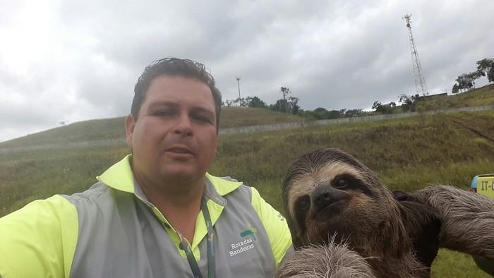 Bicho-preguiça tira selfie na rodovia (2)