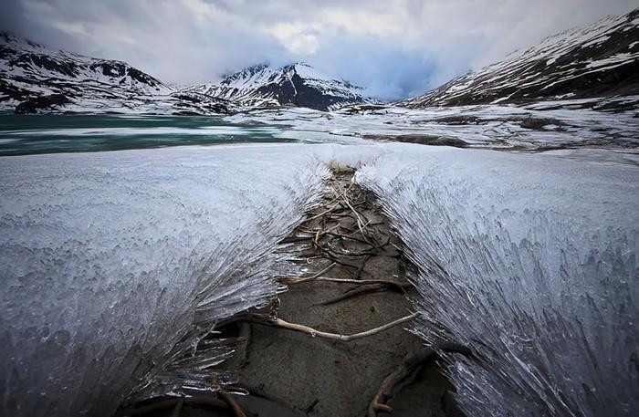 Detalhes congelados da natureza (14)