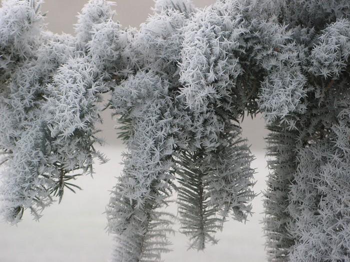 Detalhes congelados da natureza (13)