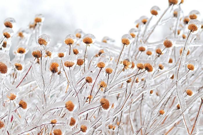 Detalhes congelados da natureza (10)