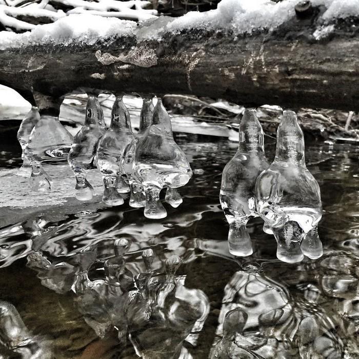 Detalhes congelados da natureza (2)