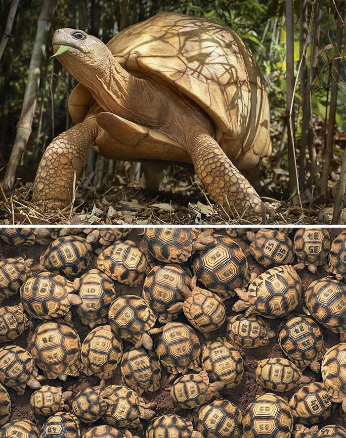 Fotógrafo cria, em dois anos, série com animais em extinção (11)