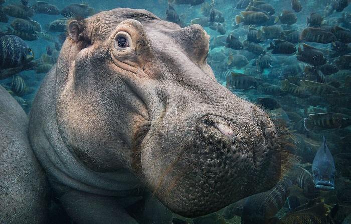 Fotógrafo cria, em dois anos, série com animais em extinção (7)