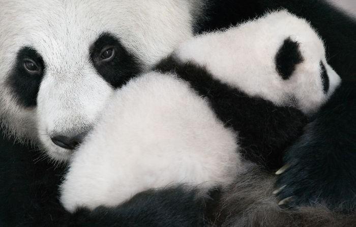 Fotógrafo cria, em dois anos, série com animais em extinção (5)