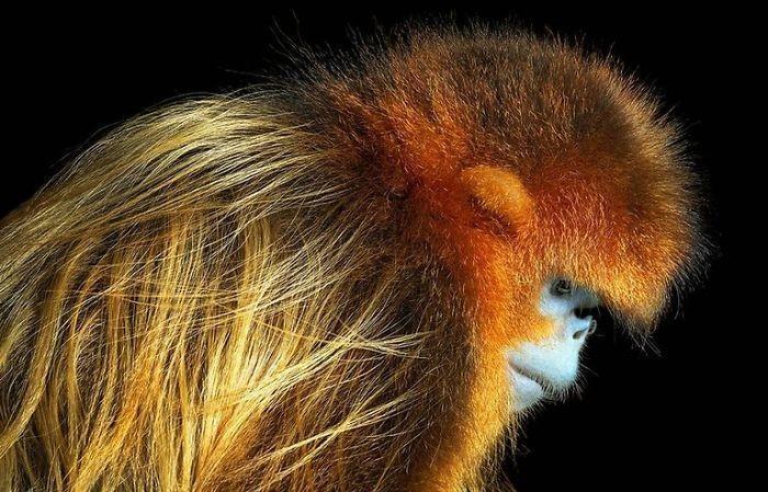 Fotógrafo cria, em dois anos, série com animais em extinção (4)