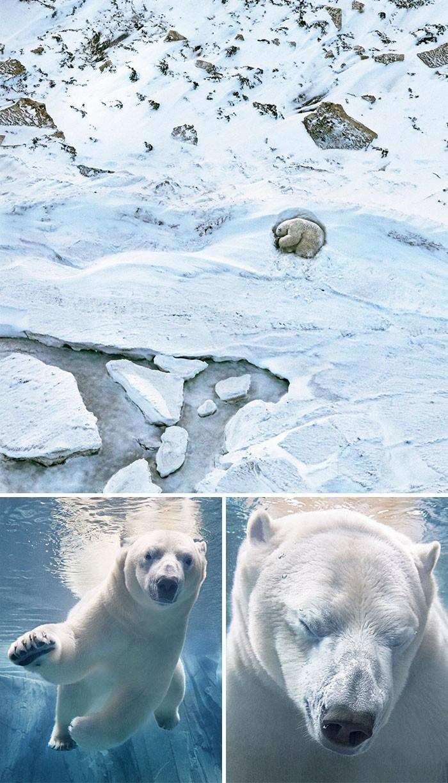 Fotógrafo cria, em dois anos, série com animais em extinção (19)