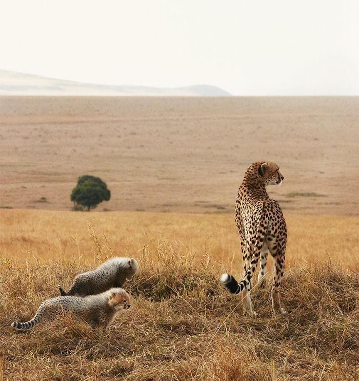 Fotógrafo cria, em dois anos, série com animais em extinção (13)