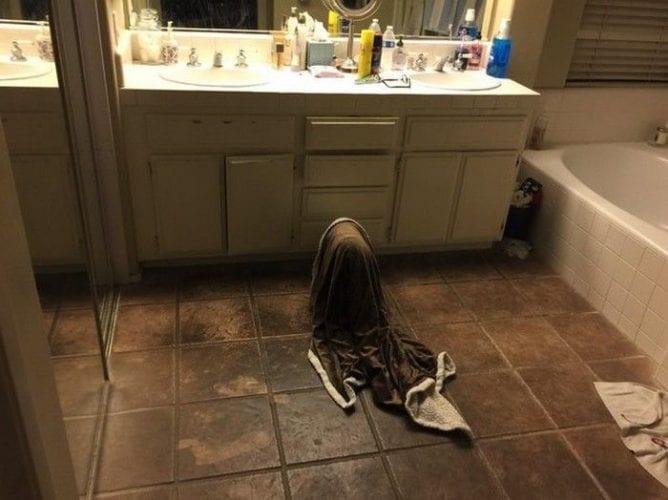 Pai se assusta com sua própria cachorrinha (7)