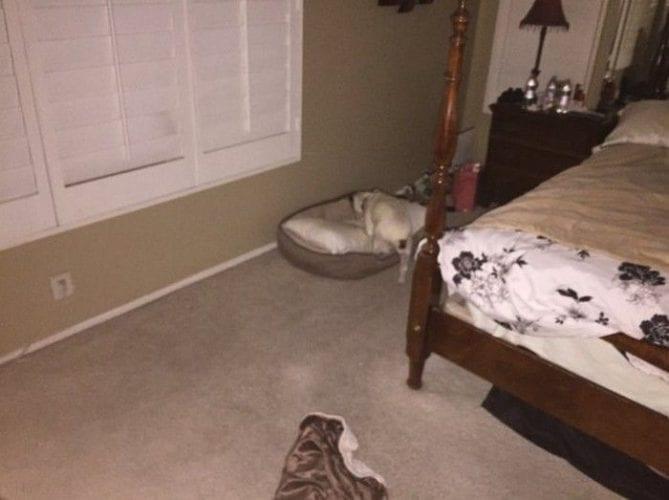 Pai se assusta com sua própria cachorrinha (3)