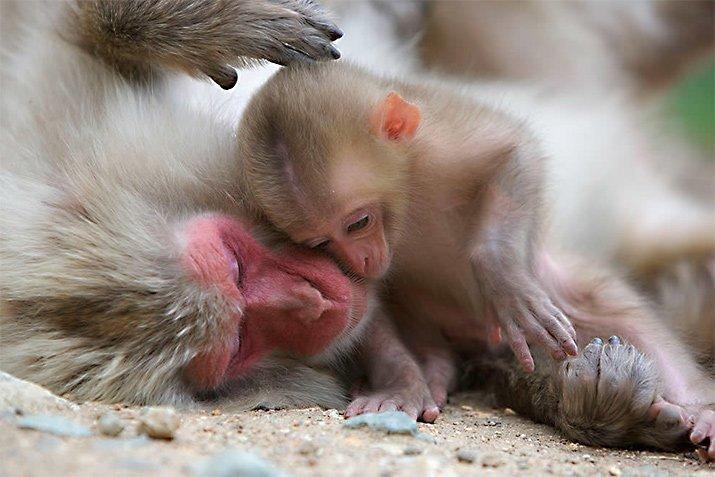 Amor de mãe animal (2)