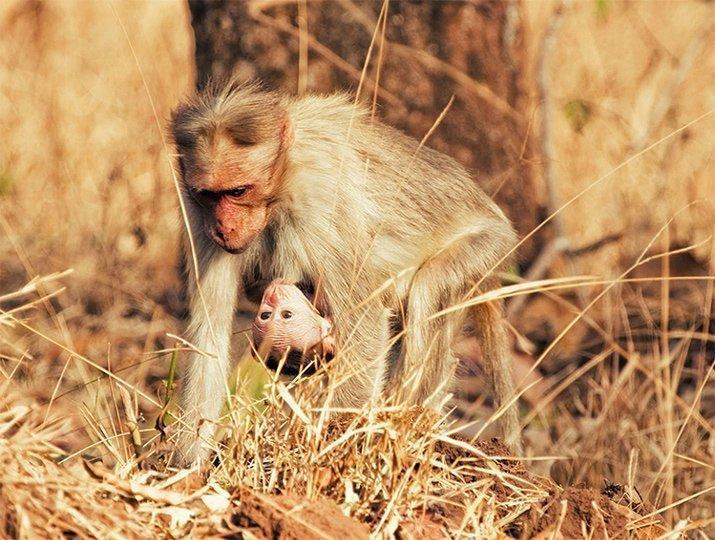 Amor de mãe animal (4)