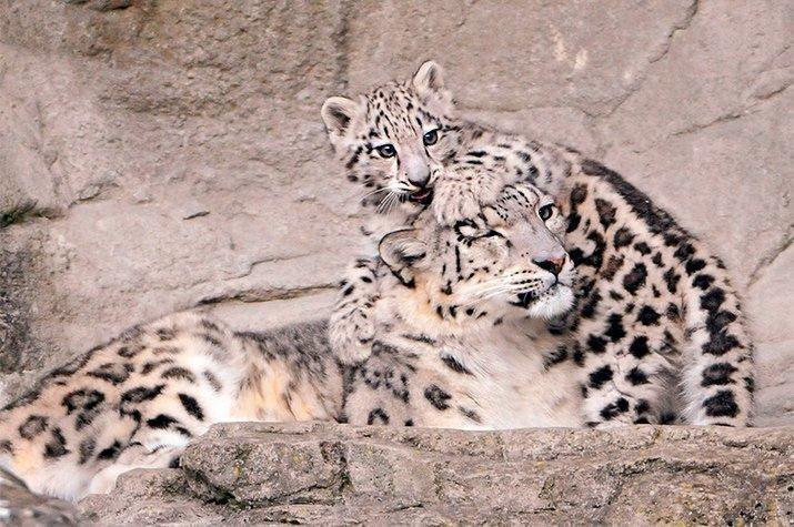 Amor de mãe animal (5)