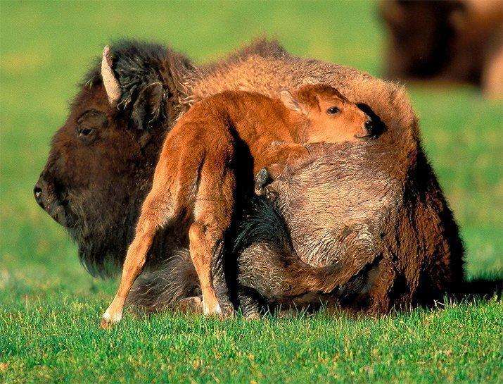 Amor de mãe animal (7)