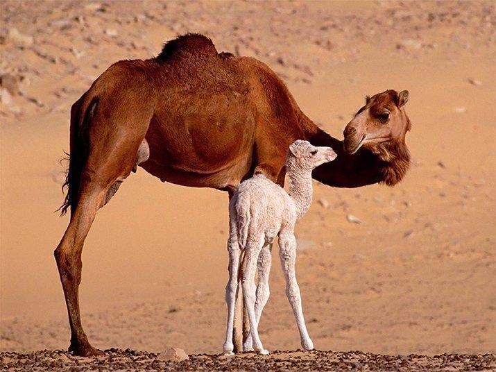 Amor de mãe animal (8)