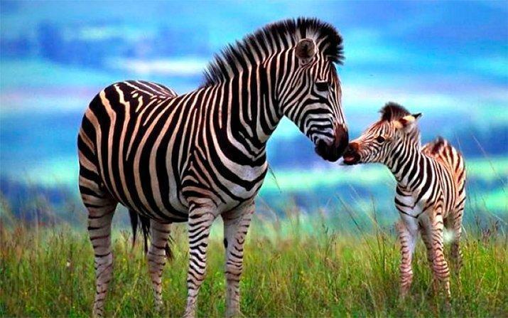 Amor de mãe animal (10)