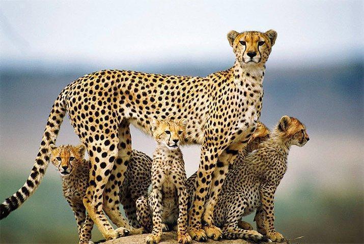 Amor de mãe animal (11)