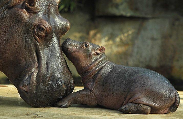 Amor de mãe animal (12)