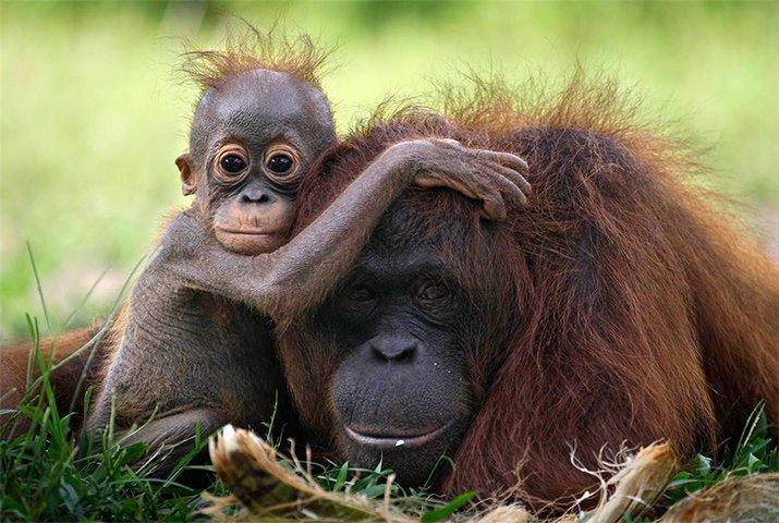 Amor de mãe animal (13)