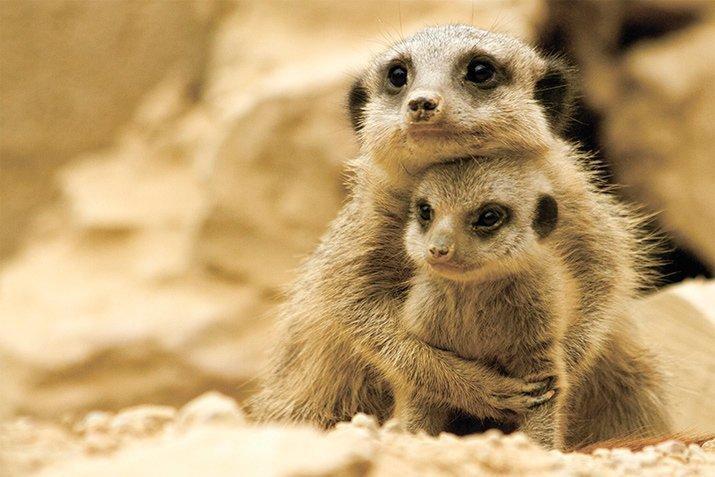 Amor de mãe animal (15)