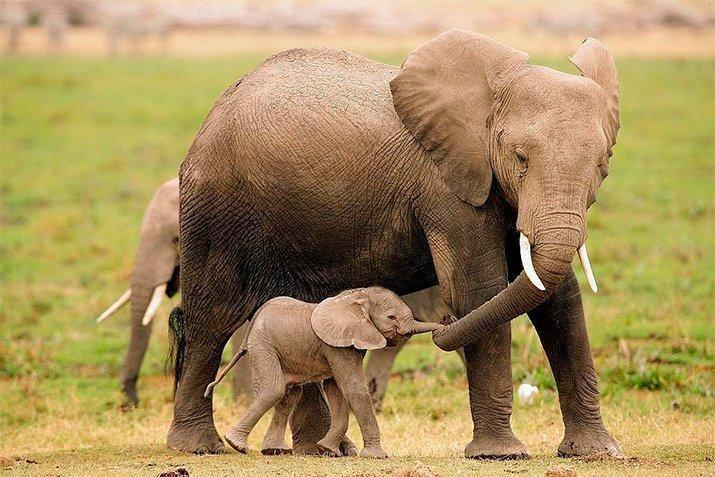 Amor de mãe animal (17)