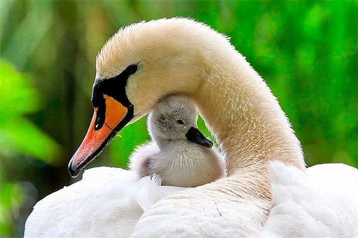 Amor de mãe animal (20)