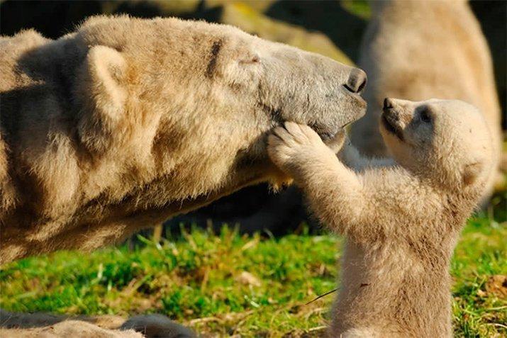 Amor de mãe animal (21)