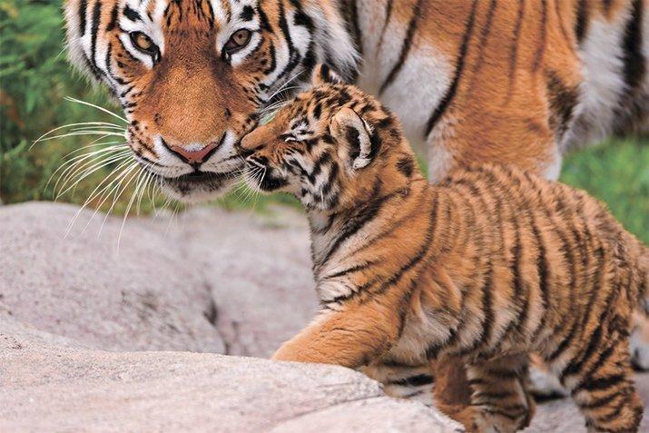 Amor de mãe animal (22)