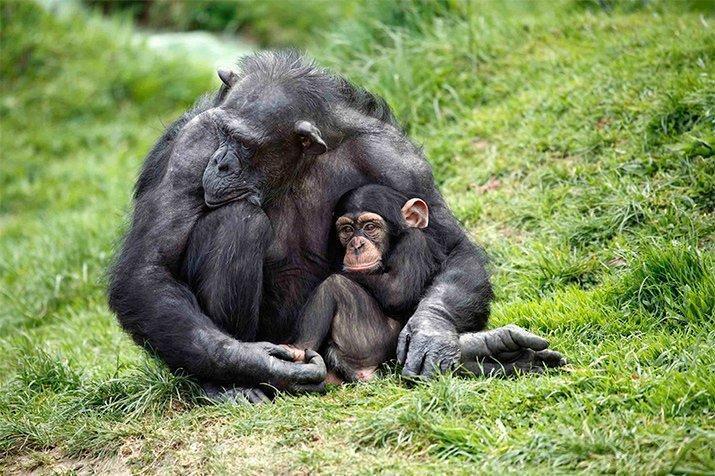 Amor de mãe animal (23)