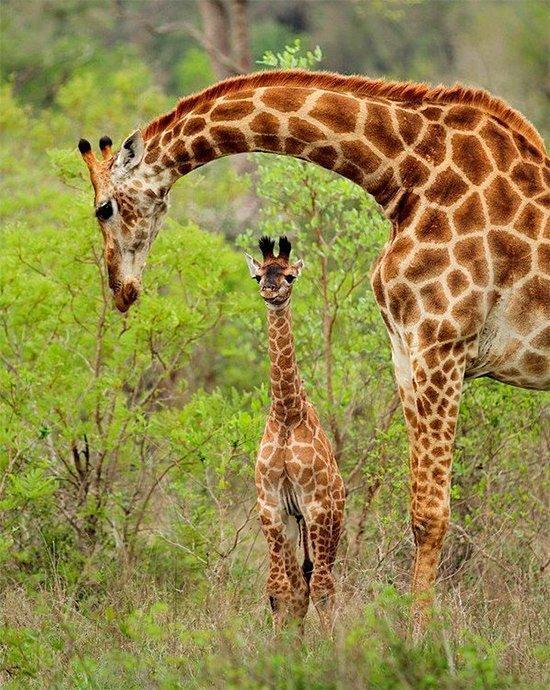 Amor de mãe animal (24)
