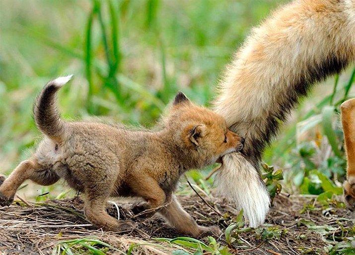 Amor de mãe animal (26)