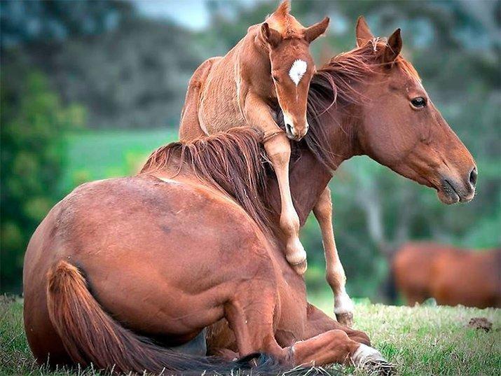 Amor de mãe animal (27)