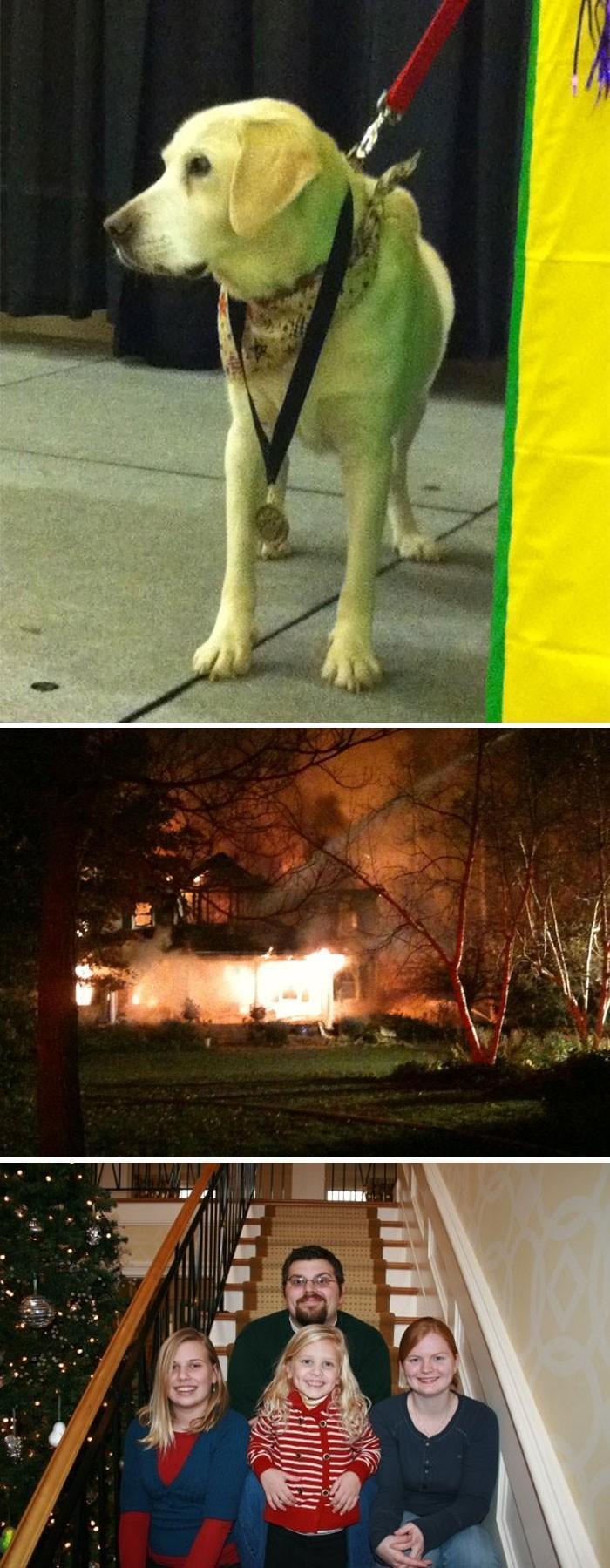 cães heróis