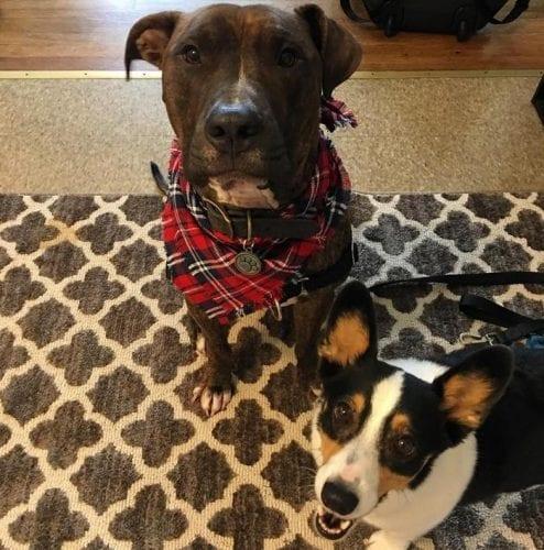 cachorro adotado demonstra amor pela dona todos os dias (5)