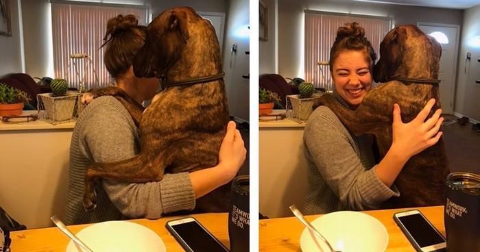 cachorro adotado demonstra amor pela dona todos os dias (1)