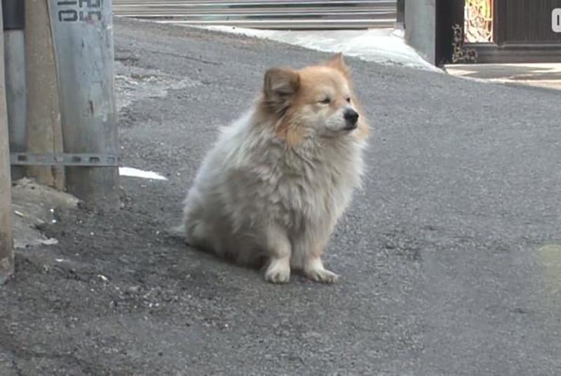 cão esperando a dona por 3 anos (1)