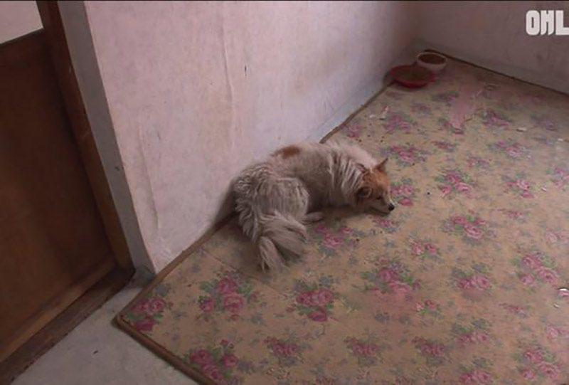 cão esperando a dona por 3 anos (2)