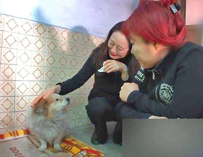 cão esperando a dona por 3 anos (3)