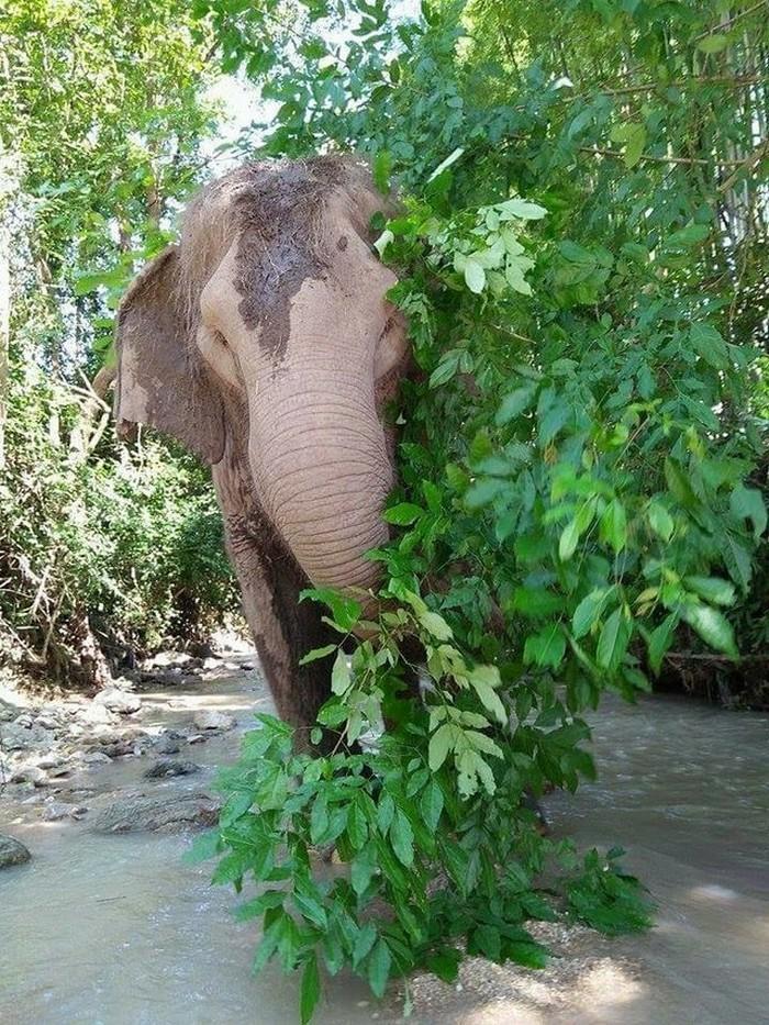 elefante de 60 anos morre na Tailãndia (10)