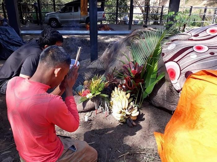 elefante de 60 anos morre na Tailãndia (4)