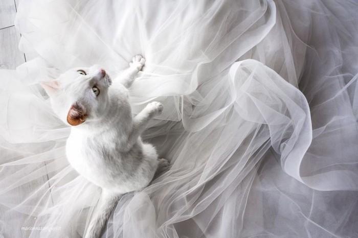 ensaio intimista pós-casamento de casal com seus gatos (11)