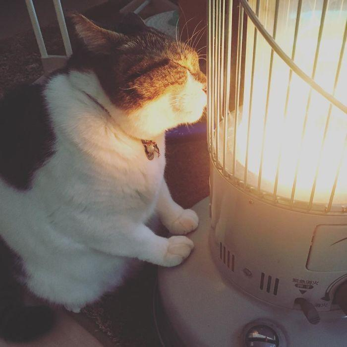 gato e aquecedor