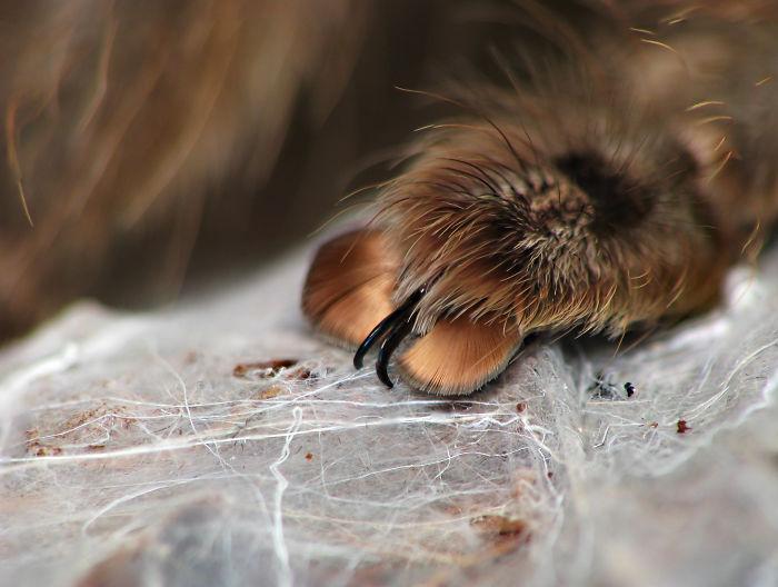 Imagens Macro de Aranhas (10)