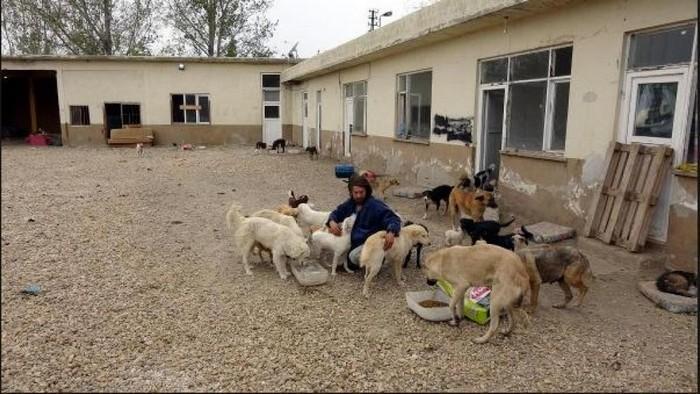 modelo larga tudo para cuidar de animais abandonados (5)